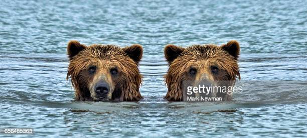 Brown Bear mirror image
