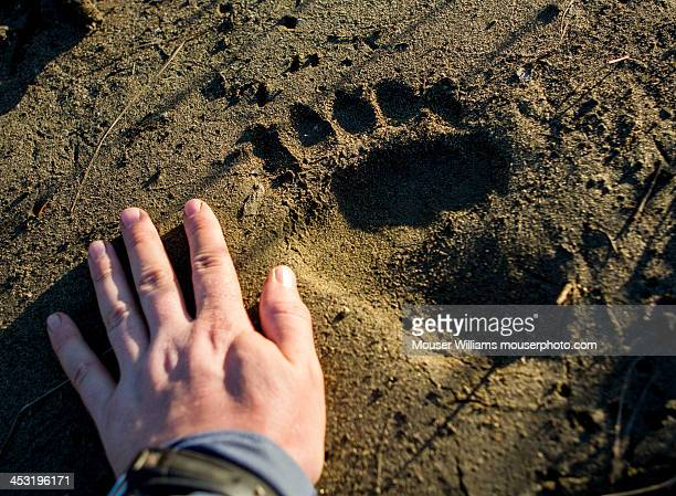 Brown Bear Paw Print
