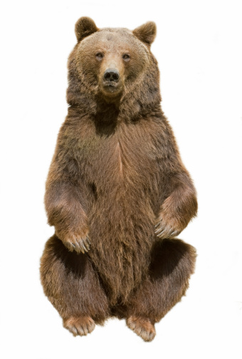 Brown Bear 173617853