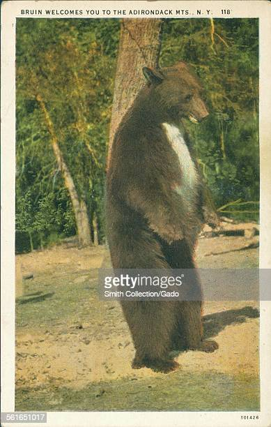 Brown bear standing on hind legs with caption reading 'Bruin Welcomes You to the Adirondack Mountains' New York 1924