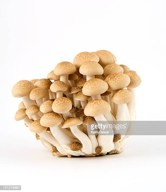 brown beech mushrooms - shimeji mushroom stock pictures, royalty-free photos & images