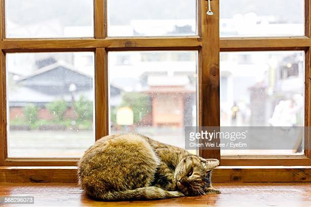 Brown Cat Resting On Table Against Window