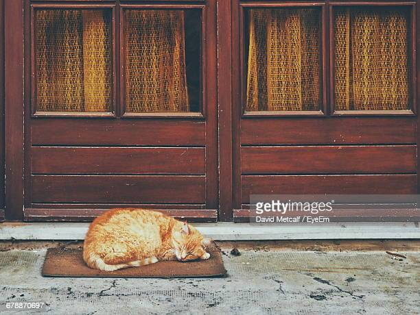 Brown Cat Sleeping On Doormat Against House