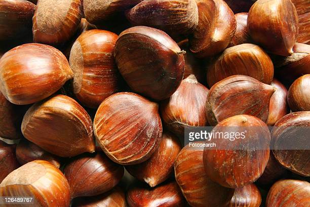brown, close, chestnut, castanea, alfred - alfred chestnut stock photos and pictures