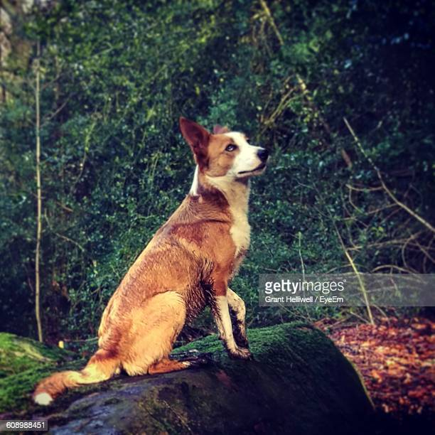 brown dog sitting on rock in forest - mytholmroyd stock pictures, royalty-free photos & images