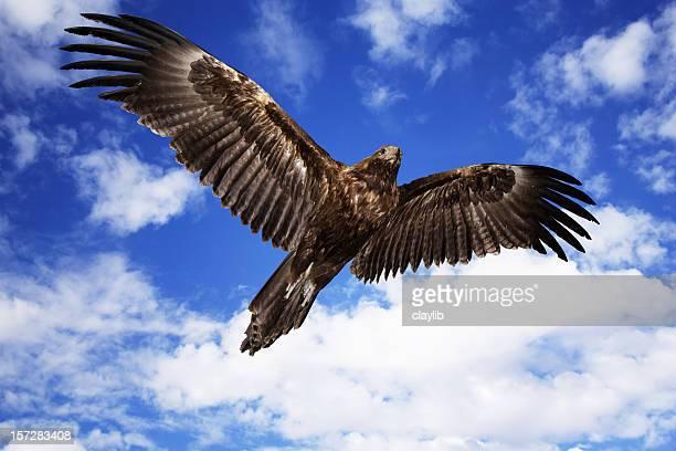 Marrón eagle