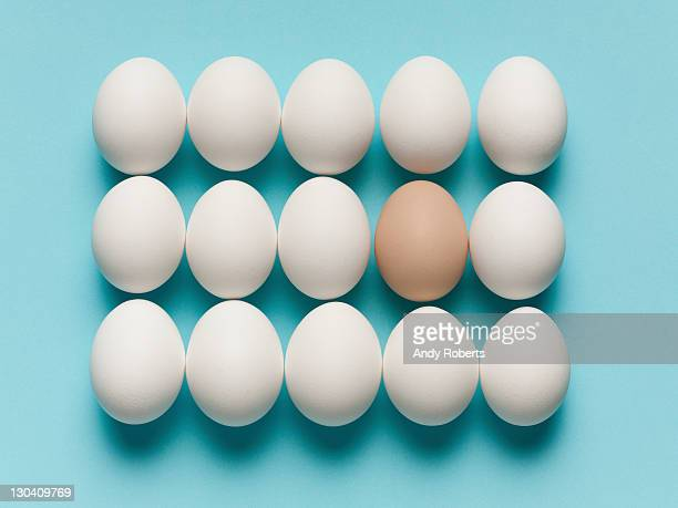 brown egg with large white eggs - special:random stock pictures, royalty-free photos & images
