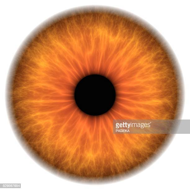 brown eye, artwork - light brown eyes stock photos and pictures