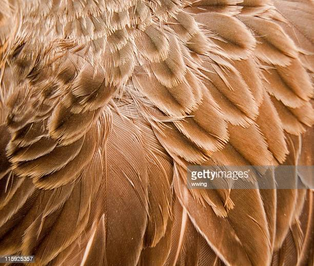 brown feather background - feather stock pictures, royalty-free photos & images