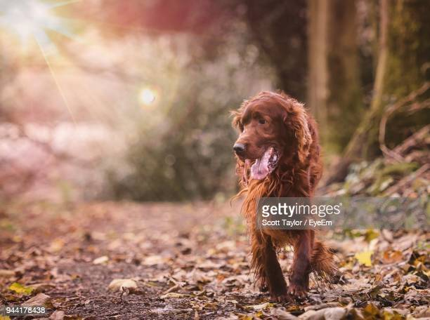 Brown Hairy Dog On Field During Autumn