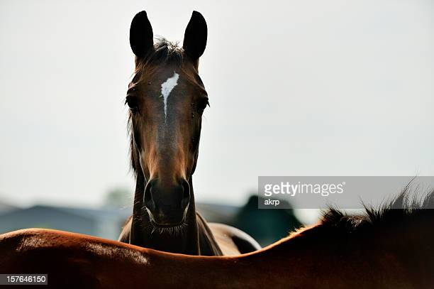 brown horse back lit - animal nose stock pictures, royalty-free photos & images