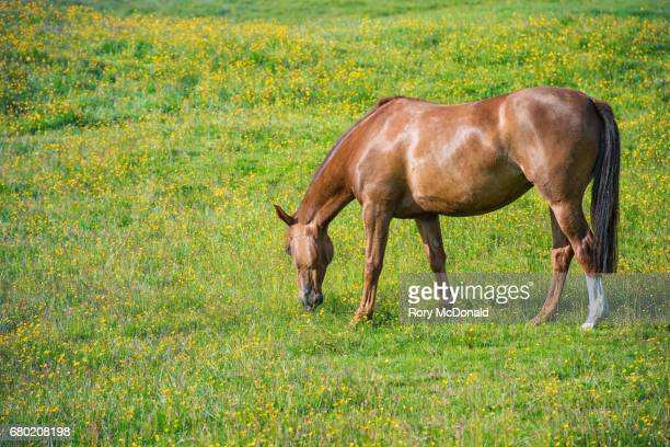 Brown horse in a grassy meadow