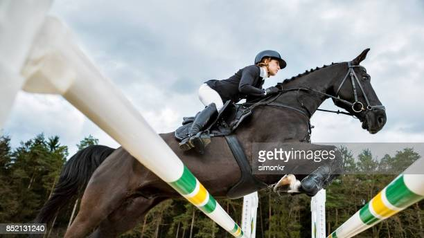 brown horse jumping an oxer with his rider - steeplechasing horse racing stock photos and pictures