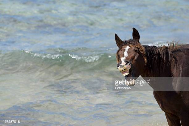 Brown horse laughing at beach