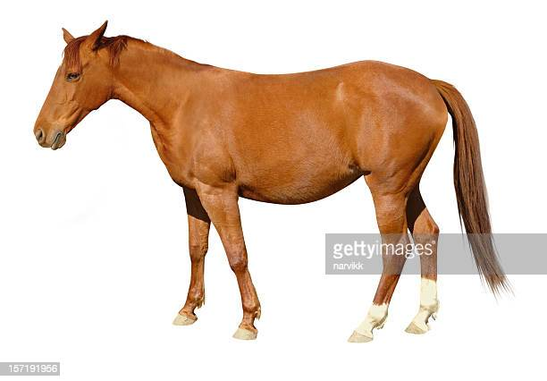 brown horse - horse stock pictures, royalty-free photos & images