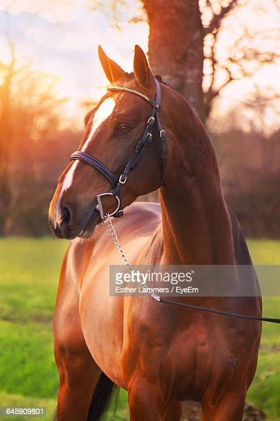 Brown Horse Standing On Field
