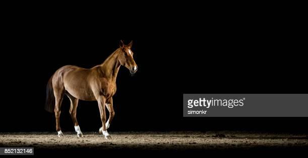 夜ホールに乗って歩く茶色の馬