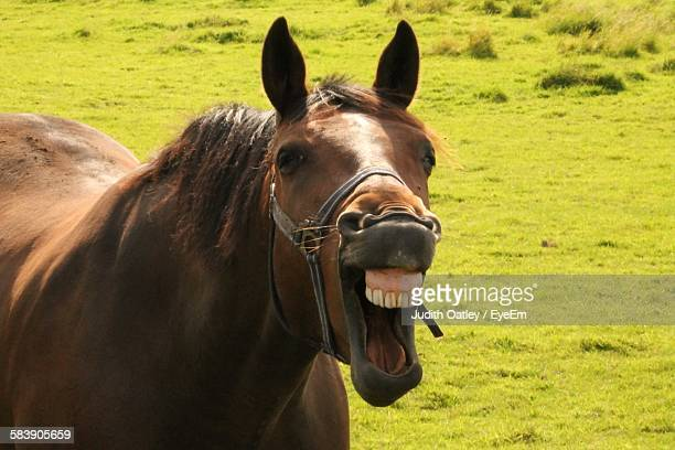 Brown Horse Yawning On Grassy Field