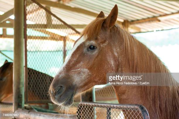 Brown Horses In Stable