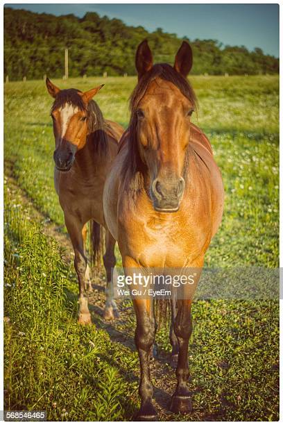 Brown Horses Standing On Field