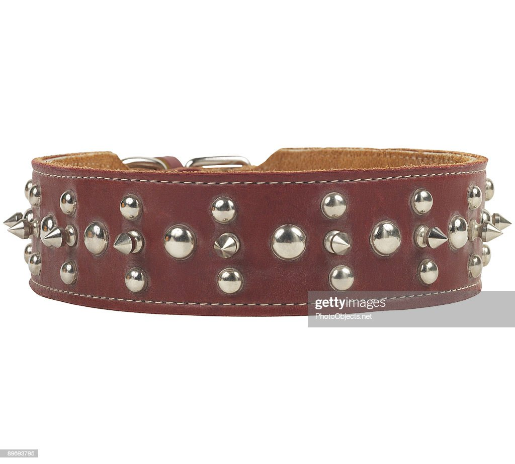 Brown Leather Dog Collar : Stock Photo