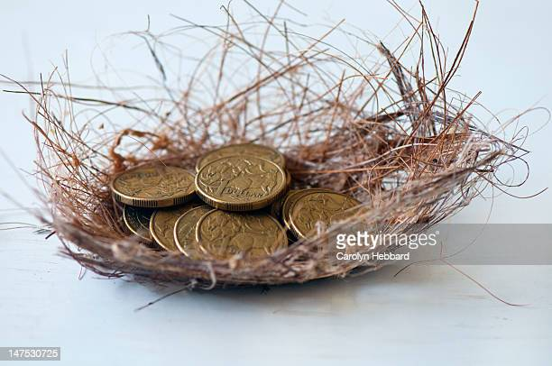 Brown nest with gold coins inside