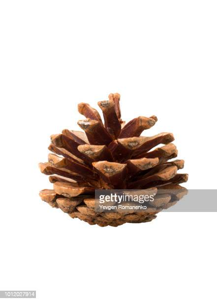 brown pine cone on white background - cone shaped objects stock pictures, royalty-free photos & images