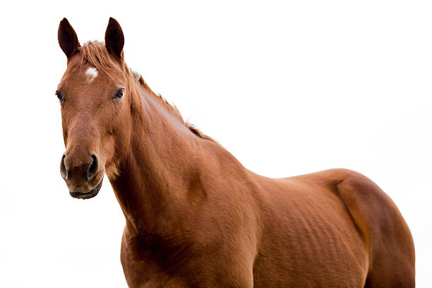 Free horse white background Images, Pictures, and Royalty ...