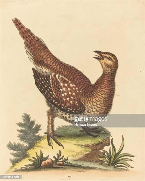 Brown Speckled Bird. Artist George Edwards.