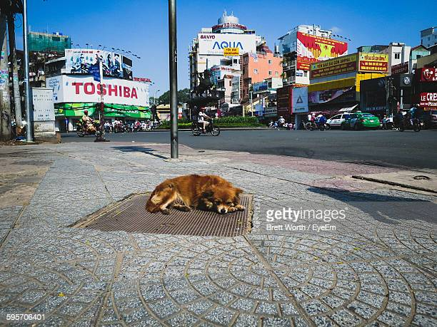 brown stray dog lying on drainage lid in city - stray animal stock pictures, royalty-free photos & images