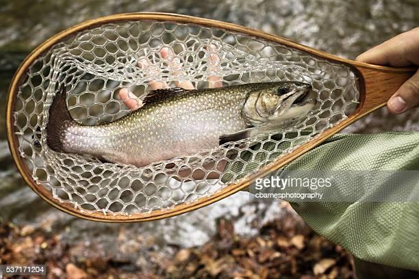 Europäische Forelle in Netz über Fluss Gefangene Fliegenfischen