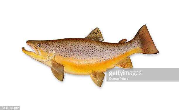 brown trout with clipping path - brown trout stock pictures, royalty-free photos & images