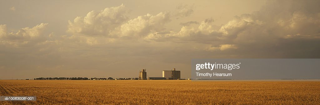 Brown wheat field with silo in background : Stock Photo