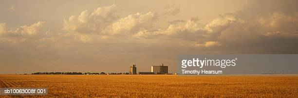 brown wheat field with silo in background - timothy hearsum stock pictures, royalty-free photos & images