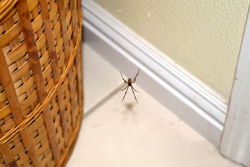 A Brown Widow Near a Basket 879255118