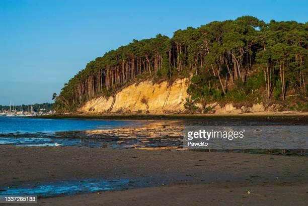 brownsea island pine woodlands - プール湾 ストックフォトと画像