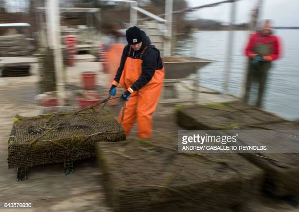 Bruce Chainay pulls a crate filled with oysters onto a dock at the Hollywood Oyster Company in Hollywood Maryland on February 21 2017 The Maryland...