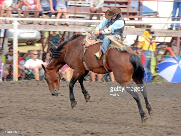 bruce stampede rodeo - bronco stadium stock pictures, royalty-free photos & images