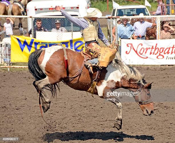 Bruce Stampede Rodeo
