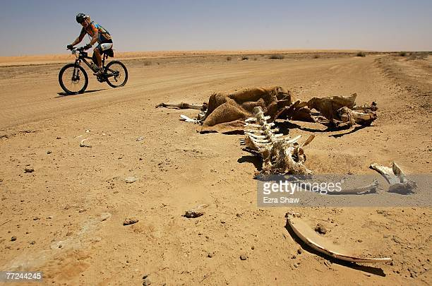 Bruce Wood from Kenmore Hills Queensland rides past a camel carcass on the side of the road during day three of the Simpson Desert Bike Challenge...