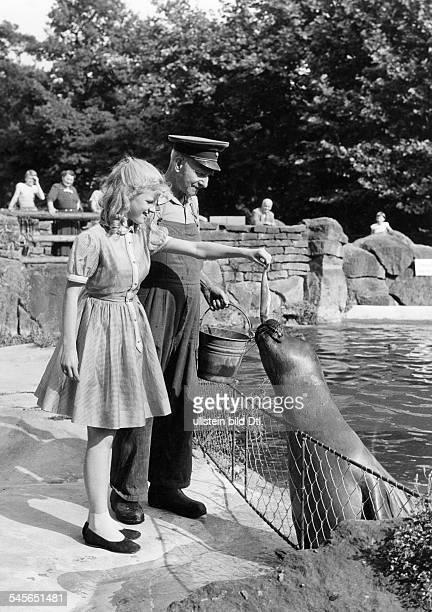 Bruehl, Heidi *30.01..1991+Schauspielerin, Saengerin, D- beim Fuettern eines Seeloewen im Berliner Zoo- 1956