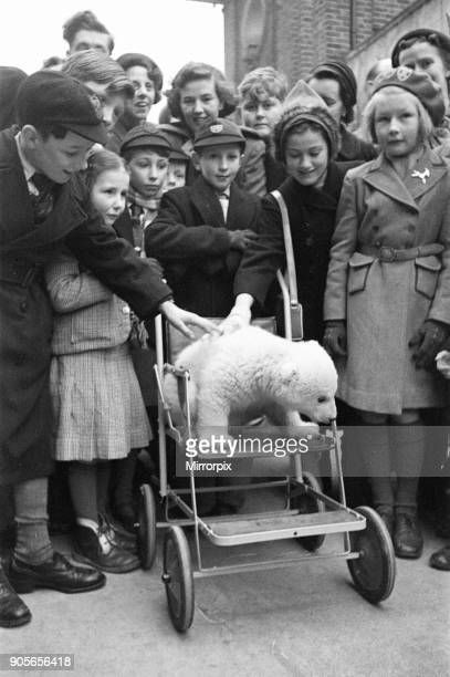 Brumas the Polar Bear born 27th November 1949 her mother is named Ivy and her father Mischa Brumas is named after her keepers Bruce and Sam She is...