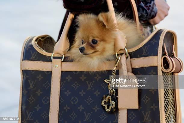 Brunay Cloe wears Valentino shoes Versace dress Louis Vuitton bag dog Dior sunglasses and Lulu da Pomerania dog during Lisbon Fashion Week...