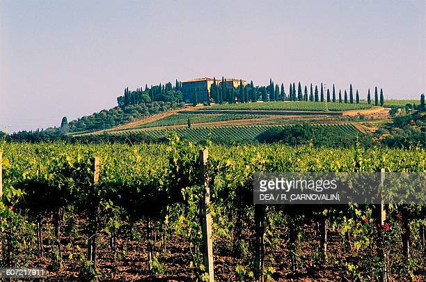 Brunello di Montalcino vineyards Montalcino Val d'Orcia Tuscany Italy