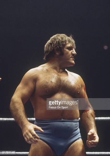 Bruno Sammartino a professional wrestler looks to his opponent in the ring. Sammartino held the World Wrestling Federation Championship for more than...