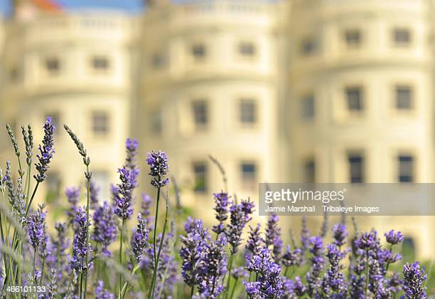 brunswick square gardens, hove, england - bloomsbury london stock photos and pictures