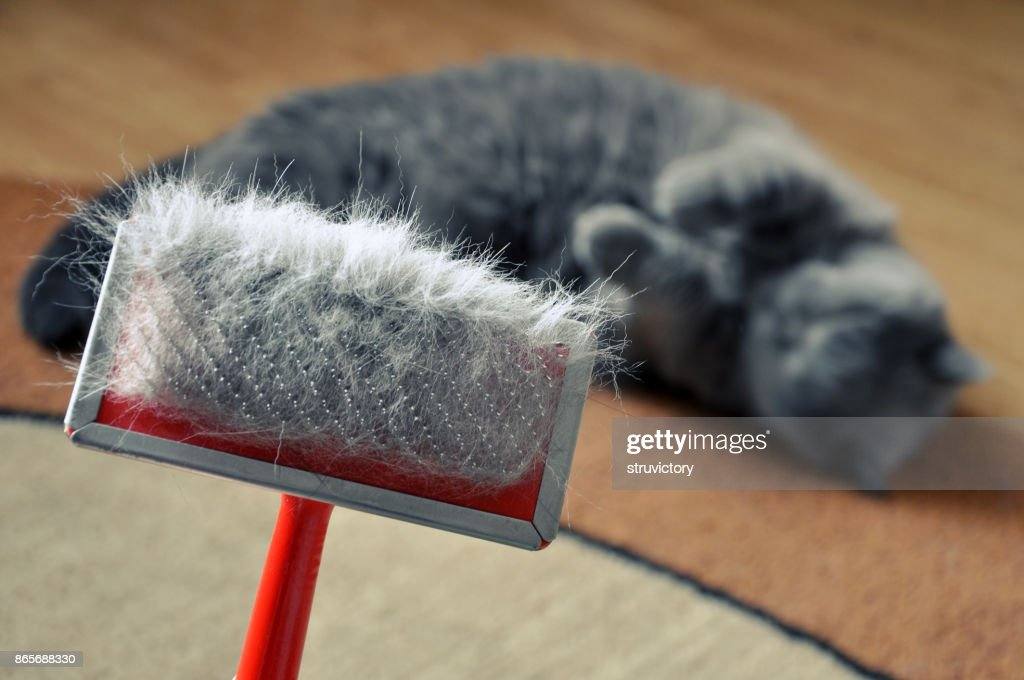 Brush for combing the cat fur with hair. : Stock Photo