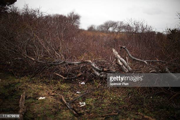 Brush is seen along a stretch of beach highway where police recently found human remains on April 5 2011 in Babylon Working on the theory of a single...
