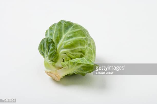 brussels sprout - 芽キャベツ ストックフォトと画像