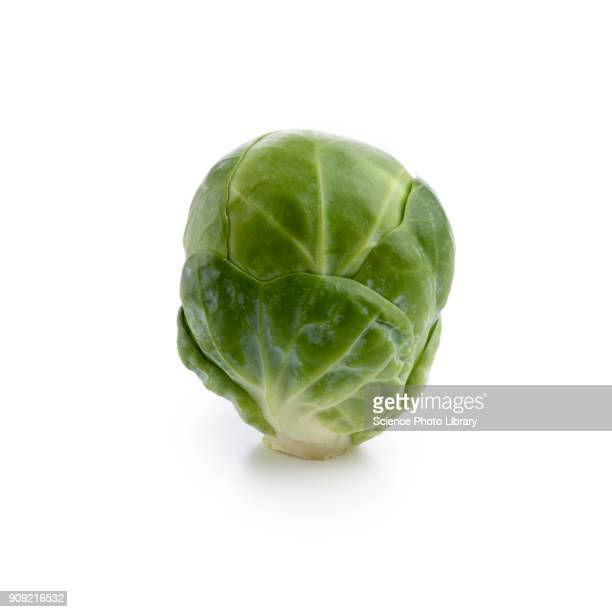 brussels sprout - cabbage family stock photos and pictures